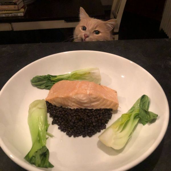 More Info for Colorful Steamed Salmon with Lentils and Bok Choy